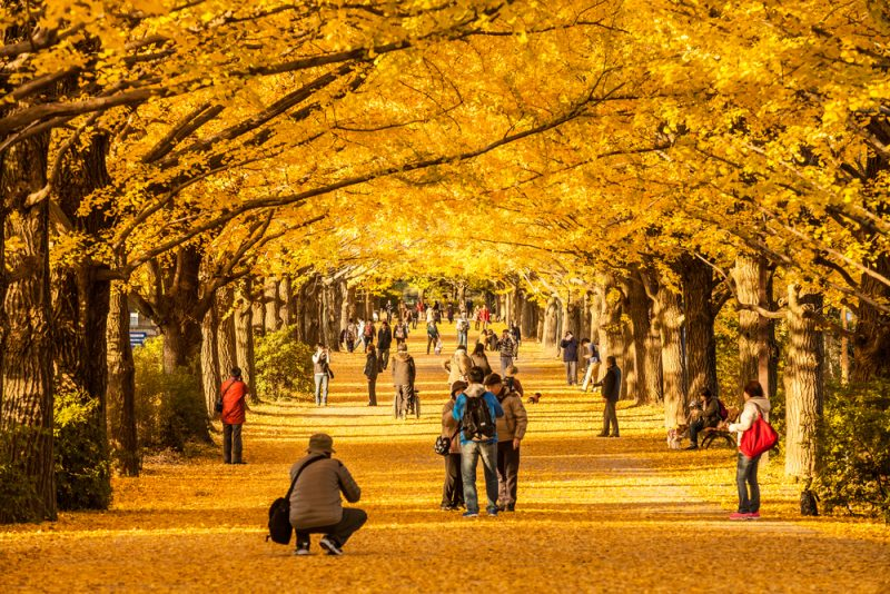 10 Best Places To See Autumn Scenery In Japan Japan Inside